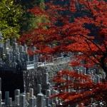 kyoto_autumn_leaves_japan_563816
