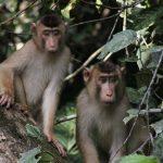 monkeys-1351743_1920