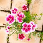 tags-flowers-780416_1920