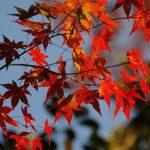kyoto_autumn_leaves_japan_559382-1024×685