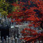 kyoto_autumn_leaves_japan_563816-1024×685