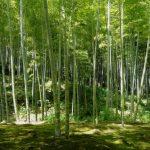 kyoto_japan_bamboo-1024×768
