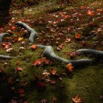 rokuon_ji_deer_garden_temple_kyoto_autumn_leaves_japan_564747-1024×685